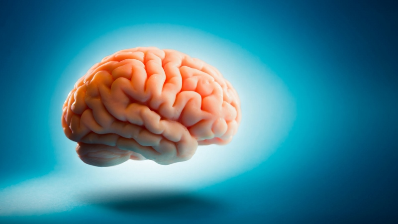 Why Your Brain Is Not a Reliable Source of Information
