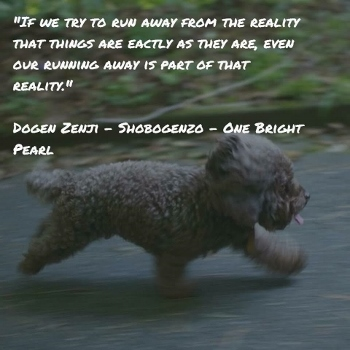 Wisdom from Dogen Zenji