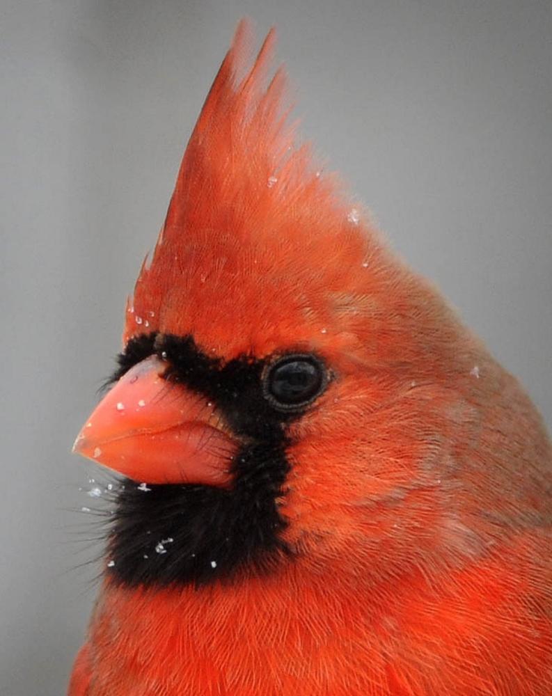 BS darkroom-feeder-birds