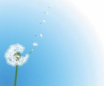 dandelion- (350x290)
