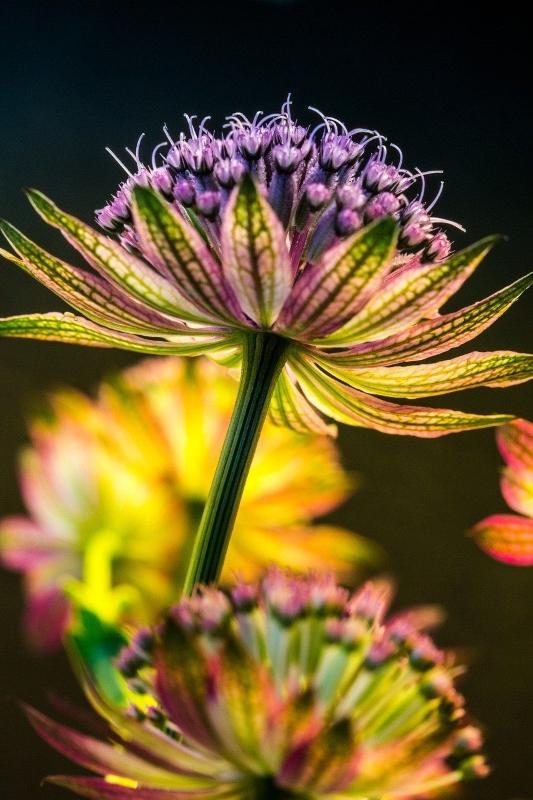 july 13 flower