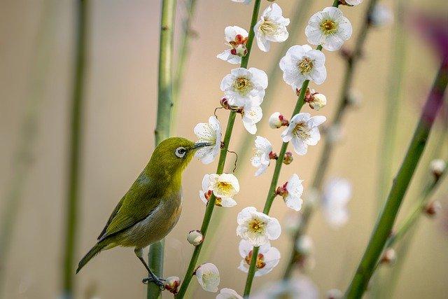 little-bird-6036530_640