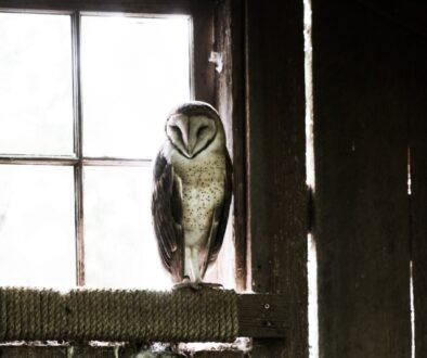 owl-801695_1920