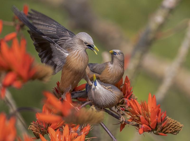 wikipic 3 birds
